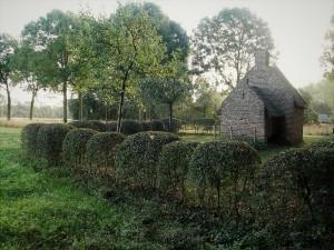 Groen erfgoed op landgoed Tongelaar tussen Gassel en Mill