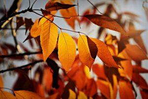herfstblad, herfst, de buitenkamer tuinontwerp, Marion Vermeulen, de Buitenkamer, Gassel
