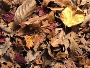herfstblad de levende tuin de buitenkamer tuinontwerp