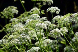 Fluitenkruid, de Buitenkamer, de levende tuin, Marion Vermeulen, Gassel