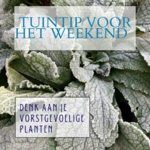 Tuintip voor het weekend vorstgevoelige planten